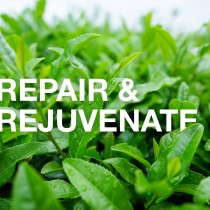 Repair & Rejuvenate (90 mins)